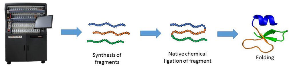 Schéma de la synthèse des protéines